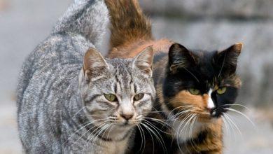 Cats Fotos Bilder 390x220 - Cats Fotos Bilder