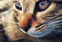 Cats Images With Words Bilder 220x150 - Cats Images With Words Bilder