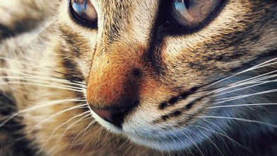 Cats Images With Words Bilder 390x220 - Cats Images With Words Bilder