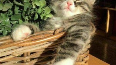 Cats Pi Bilder 390x220 - Cats Pi Bilder