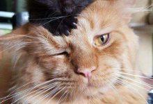 Cats Pictures Gallery Bilder 220x150 - Cats Pictures Gallery Bilder