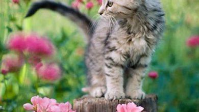 Cool Cat Pics Bilder 390x220 - Cool Cat Pics Bilder