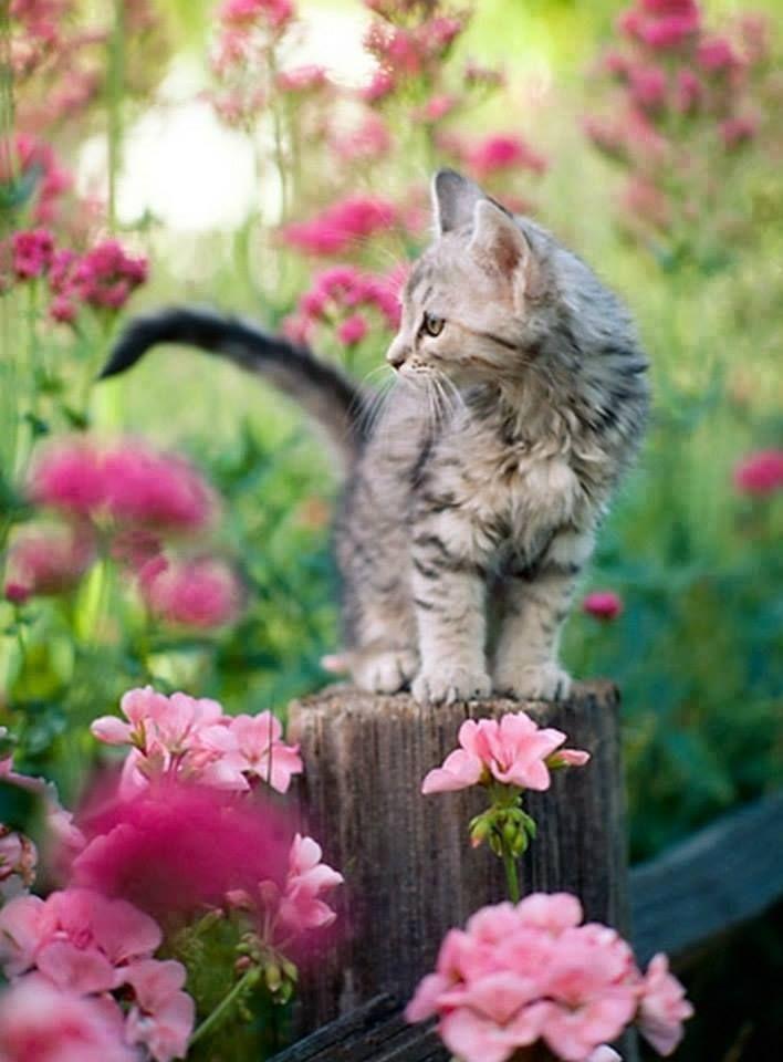 Cool Cat Pics Bilder - Cool Cat Pics Bilder