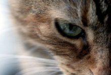 Coole Katzenbilder 220x150 - Coole Katzenbilder