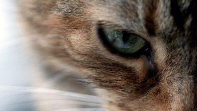 Coole Katzenbilder 390x220 - Coole Katzenbilder