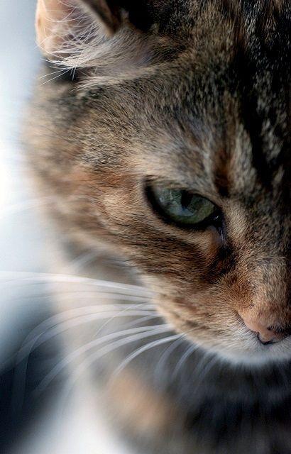 Coole Katzenbilder - Coole Katzenbilder