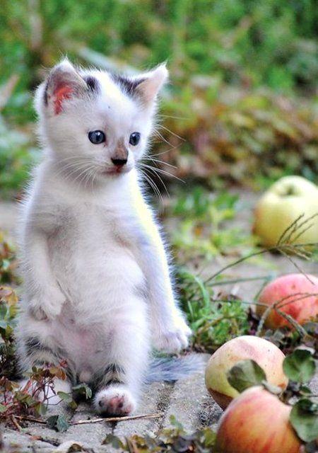 Coole Katzenrassen - Coole Katzenrassen