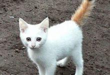 Coon Katze 220x150 - Coon Katze