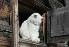 Crazy Funny Cat Pictures Bilder 220x150 - Crazy Funny Cat Pictures Bilder