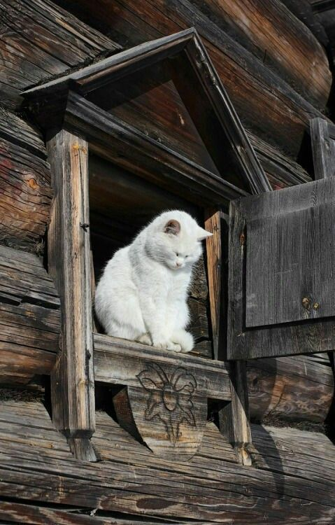 Crazy Funny Cat Pictures Bilder - Crazy Funny Cat Pictures Bilder