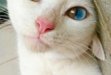 Crazy Kitty Pictures Bilder 220x150 - Crazy Kitty Pictures Bilder