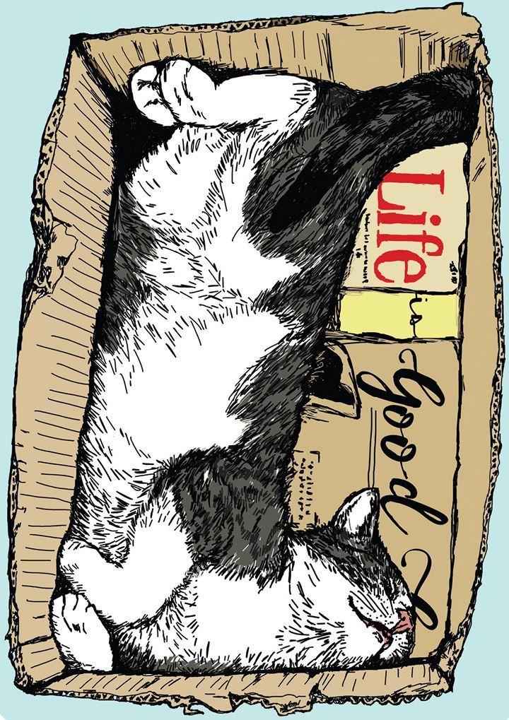 Cut Cat Image Bilder - Cut Cat Image Bilder