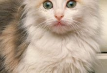 Cut Cats Photos Bilder 220x150 - Cut Cats Photos Bilder