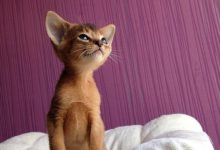 Cute And Funny Cats Bilder 220x150 - Cute And Funny Cats Bilder
