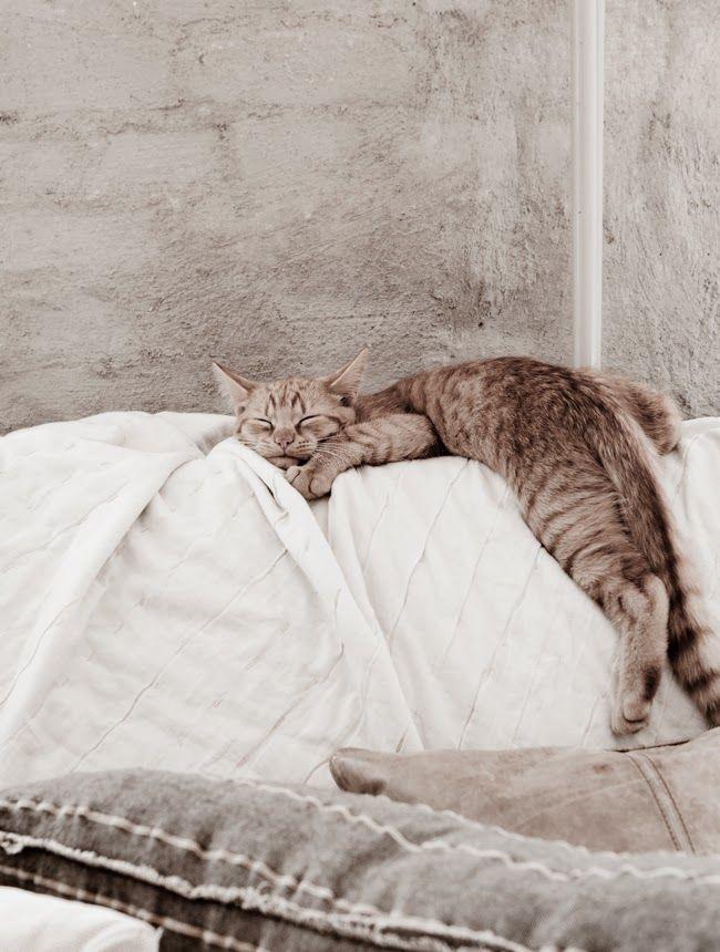 Cute Cat Gallery Bilder - Cute Cat Gallery Bilder