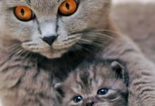 Cute Cat Hd Photos Bilder 220x150 - Cute Cat Hd Photos Bilder