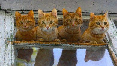Cute Cat Hd Pic Bilder 390x220 - Cute Cat Hd Pic Bilder
