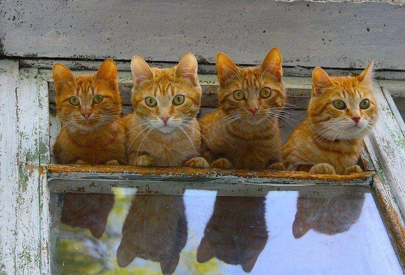 Cute Cat Hd Pic Bilder - Cute Cat Hd Pic Bilder