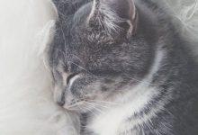 Cute Cat Image Free Download Bilder 220x150 - Cute Cat Image Free Download Bilder