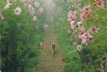 Cute Cat Images Bilder 220x150 - Cute Cat Images Bilder