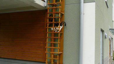 Cute Cat Images Gallery Bilder 390x220 - Cute Cat Images Gallery Bilder