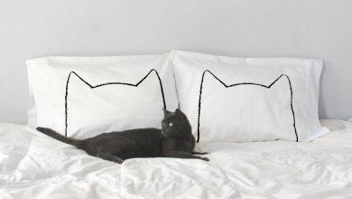 Cute Cat Images With Quotes Bilder 390x220 - Cute Cat Images With Quotes Bilder