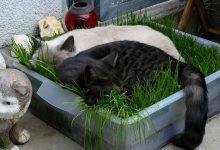 Cute Cat Kitten Images Bilder 220x150 - Cute Cat Kitten Images Bilder