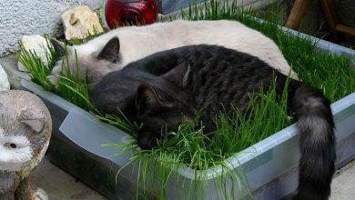 Cute Cat Kitten Images Bilder 390x220 - Cute Cat Kitten Images Bilder