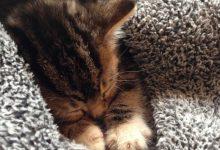 Cute Cat Love Images Bilder 220x150 - Cute Cat Love Images Bilder