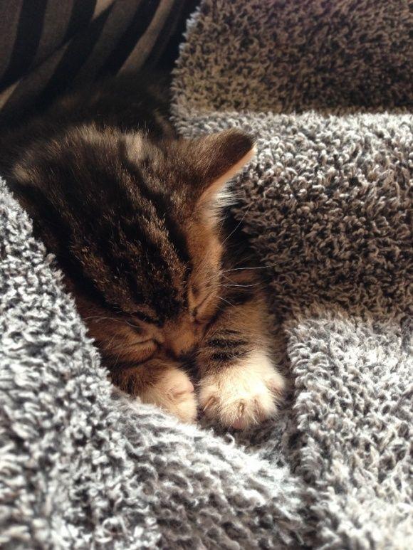 cute cat love images bilder  bilder und sprüche für