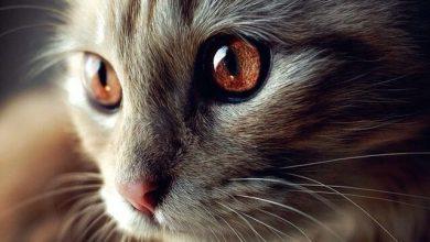 Cute Cat Photography Bilder 390x220 - Cute Cat Photography Bilder