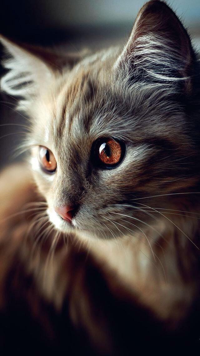 Cute Cat Photography Bilder - Cute Cat Photography Bilder