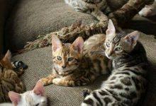 Cute Cat Photos Bilder 220x150 - Cute Cat Photos Bilder
