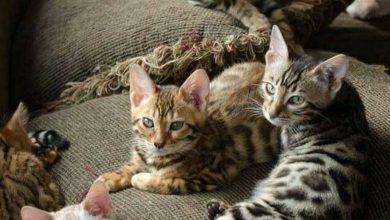 Cute Cat Photos Bilder 390x220 - Cute Cat Photos Bilder