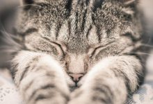 Cute Cat Photos With Captions Bilder 220x150 - Cute Cat Photos With Captions Bilder