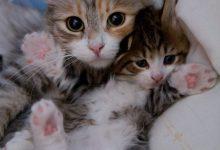 Cute Cat Photos With Quotes Bilder 220x150 - Cute Cat Photos With Quotes Bilder