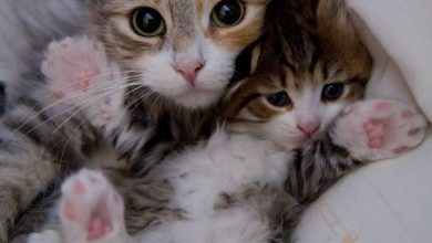 Cute Cat Photos With Quotes Bilder 390x220 - Cute Cat Photos With Quotes Bilder