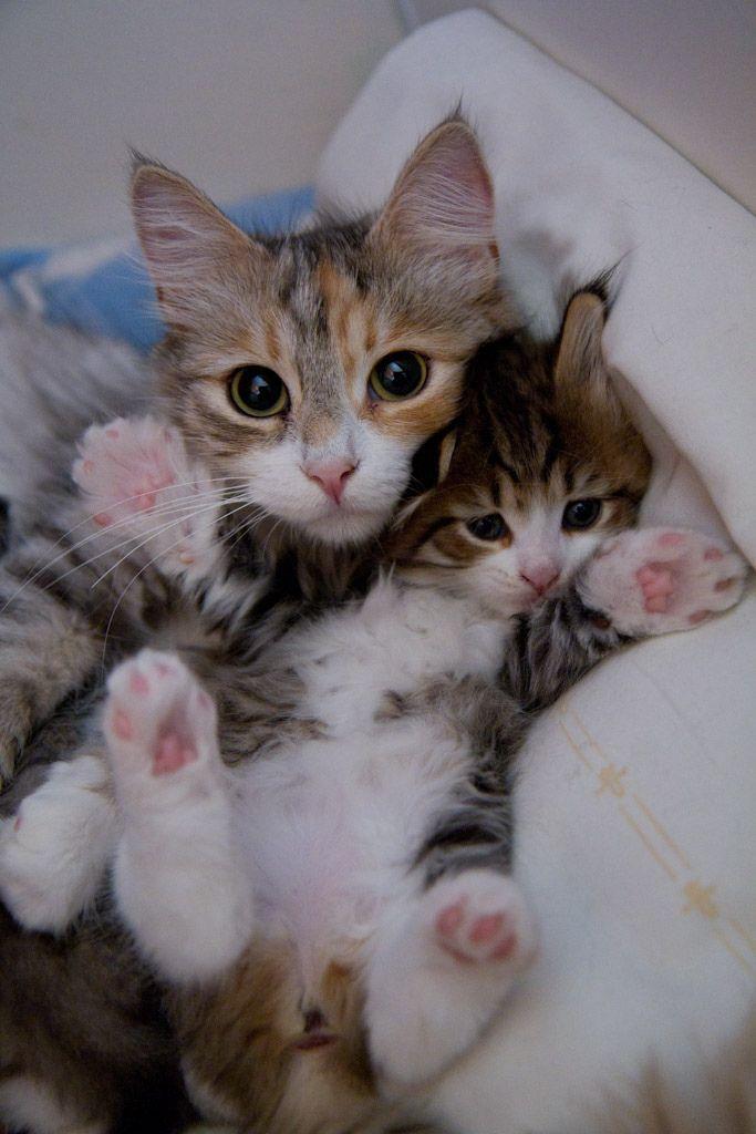 Cute Cat Photos With Quotes Bilder - Cute Cat Photos With Quotes Bilder