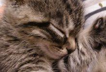 Cute Cat Pics Bilder 220x150 - Cute Cat Pics Bilder