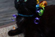 Cute Cat Pics For Facebook Bilder 220x150 - Cute Cat Pics For Facebook Bilder