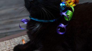 Cute Cat Pics For Facebook Bilder 390x220 - Cute Cat Pics For Facebook Bilder