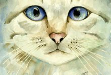 Cute Cat Pics Hd Bilder 220x150 - Cute Cat Pics Hd Bilder