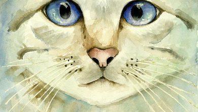 Cute Cat Pics Hd Bilder 390x220 - Cute Cat Pics Hd Bilder