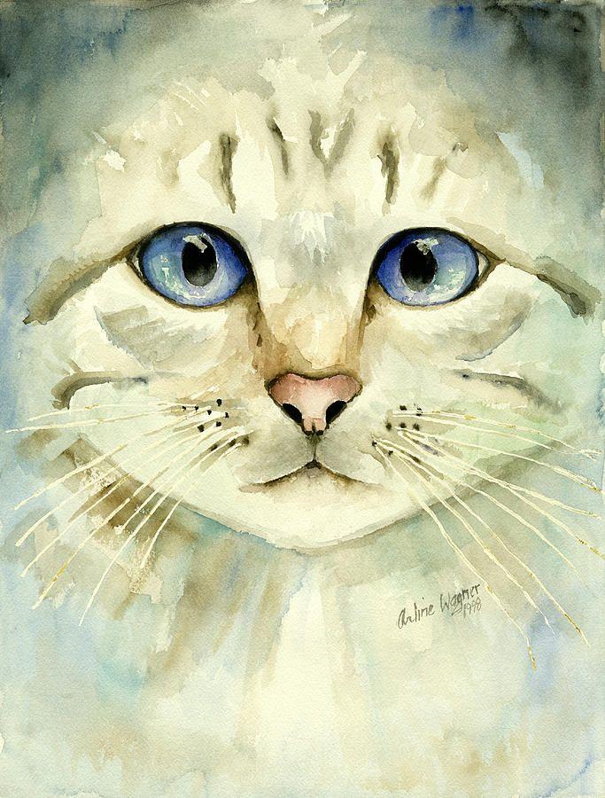 Cute Cat Pics Hd Bilder - Cute Cat Pics Hd Bilder