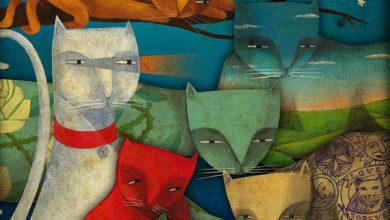 Cute Cat Pics With Quotes Bilder 390x220 - Cute Cat Pics With Quotes Bilder