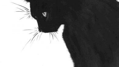 Cute Cat Pictures Download Bilder 390x220 - Cute Cat Pictures Download Bilder