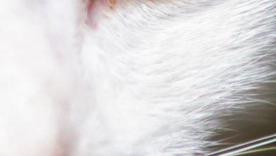 Cute Cat Pictures For Facebook Bilder 390x220 - Cute Cat Pictures For Facebook Bilder