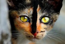 Cute Cat Pictures With Words Bilder 220x150 - Cute Cat Pictures With Words Bilder
