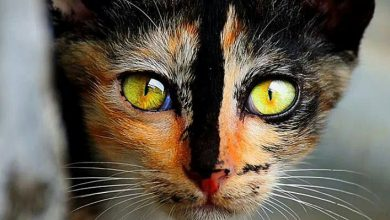 Cute Cat Pictures With Words Bilder 390x220 - Cute Cat Pictures With Words Bilder