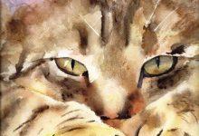 Cute Cat Pix Bilder 220x150 - Cute Cat Pix Bilder